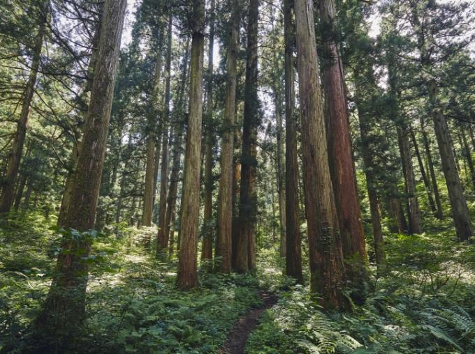 町を支えてきた林業