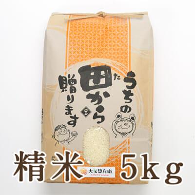 山形県 庄内産 ササニシキ 精米 5kg