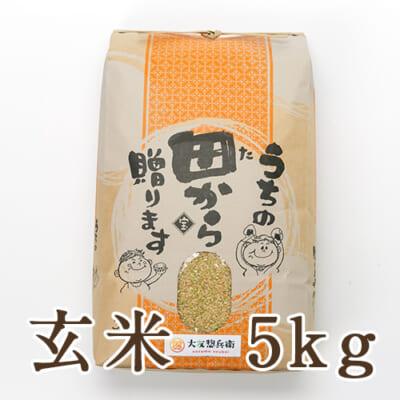 山形県 庄内産 ササニシキ 玄米 5kg