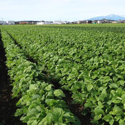 山形県の「特別栽培」認証を受けています