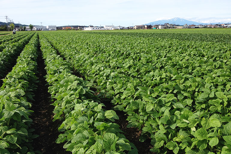 堆肥や緑肥を使った、自然にやさしい農業
