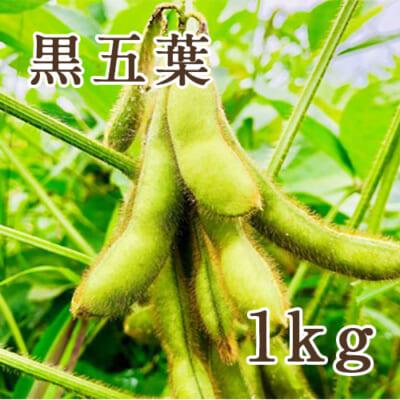 山形県産 枝豆 黒五葉 1kg