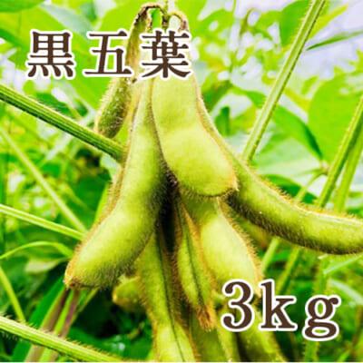 山形県産 枝豆 黒五葉 3kg