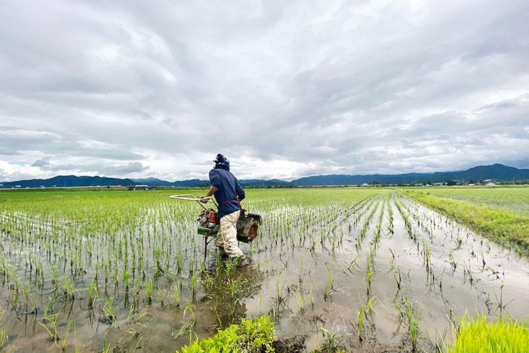 大自然に囲まれた、お米作りに最適な土壌
