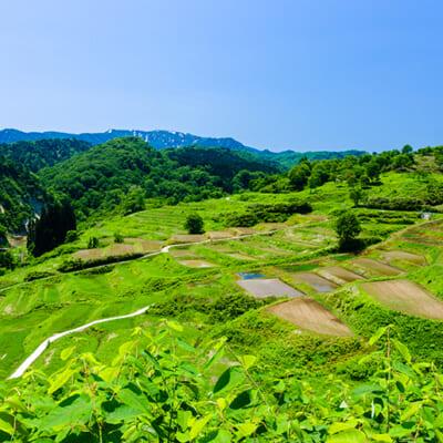 美しい棚田「日本の原風景」