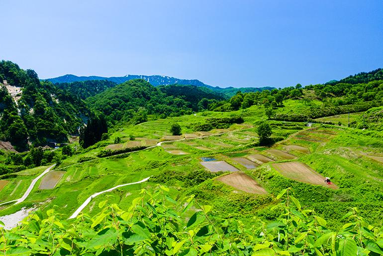 棚田が育む「四ヶ村の米」