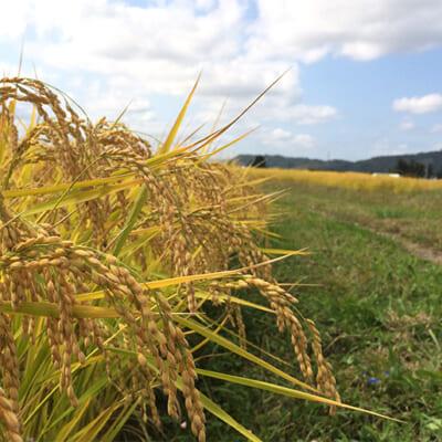 独自配合の有機肥料で、お米の品質を向上