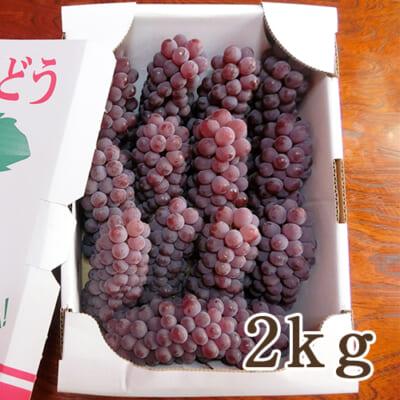 山形県産 種なしぶどう デラウェア 2kg