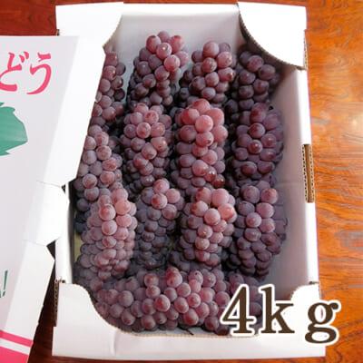 山形県産 種なしぶどう デラウェア 4kg
