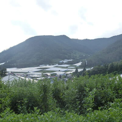 山間部ならではの傾斜地栽培