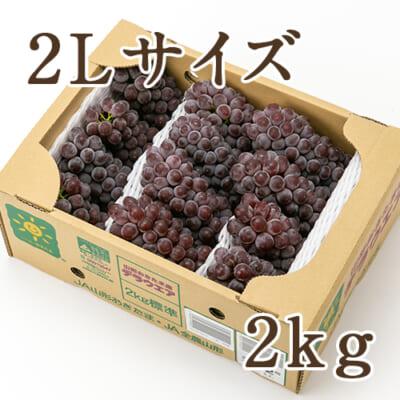 山形県産 種なしぶどう デラウェア 2Lサイズ 2kg