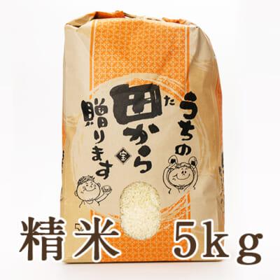 山形県産ササニシキ 精米5kg