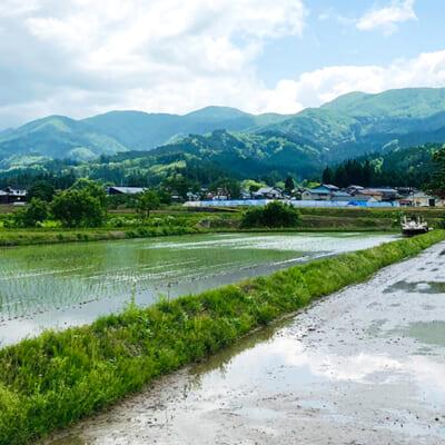 国内有数の豪雪地帯!寒暖差が美味しいお米を育む