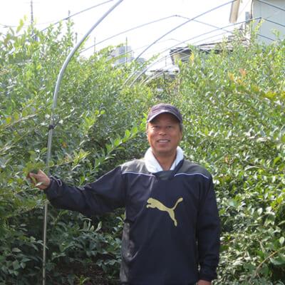 栽培期間中、農薬不使用で育てる
